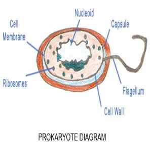 Prokaryotic Vs Eukaryotic Cell - Difference and Comparison